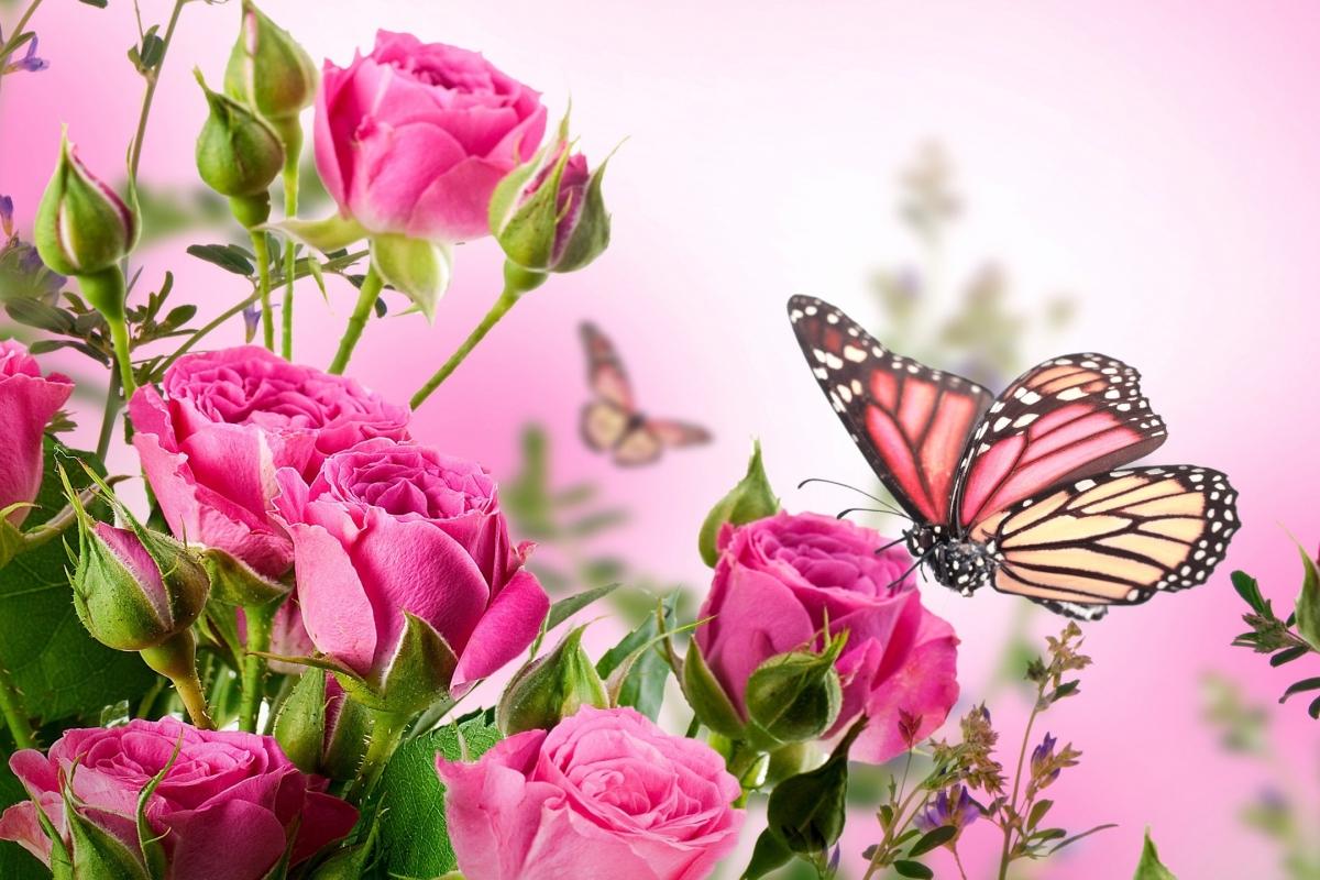 butterfly-with-flowers-wallpapers-46.jpg